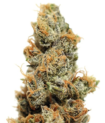 Barney-s-farm-pineapple-chunk