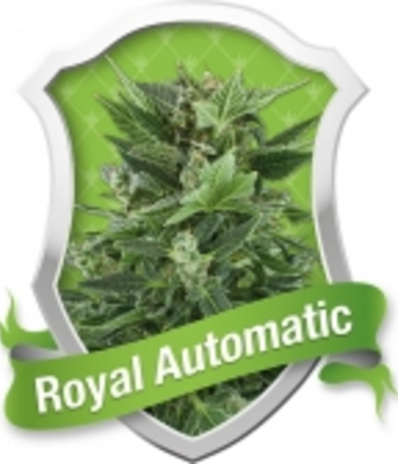 Royal Automatic