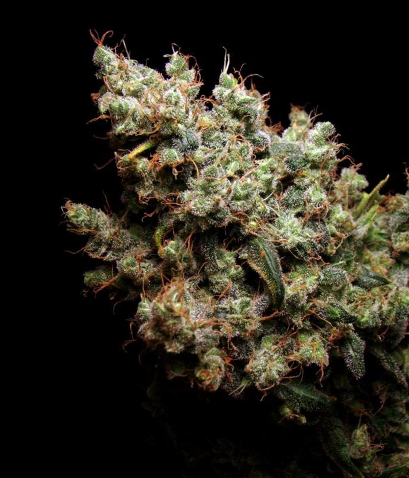 Cryptocurrency weed seeds canada