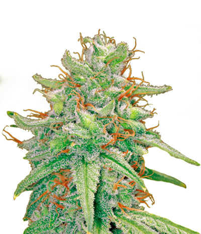 Barney-s-farm-blue-cheese