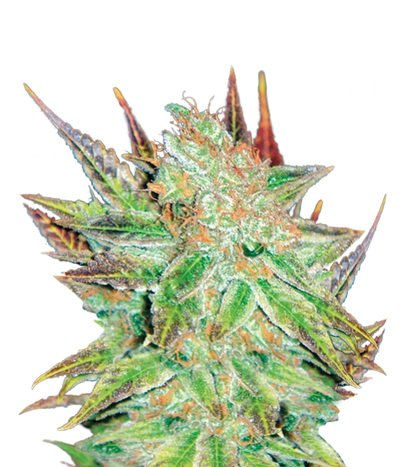 Medical-seeds-prozack