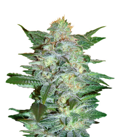 World-of-seeds-yumbolt-47