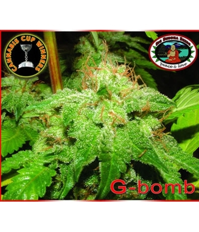 Big-buddha-seeds-g-bomb