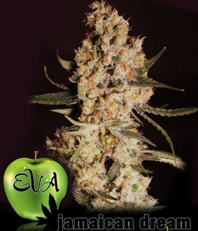 Jamaican-dream_2062_1_