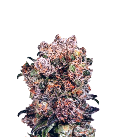 Dutch-passion-blueberry