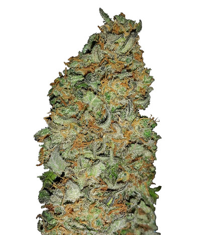Green-house-seeds-king-s-kush-cbd