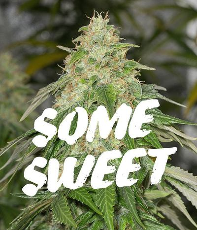 Medical-seeds-some-sweet
