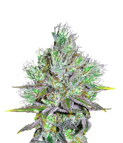 Cbd-crew-cbd-sweet-and-sour-widow