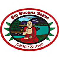 Big_buddha_seeds
