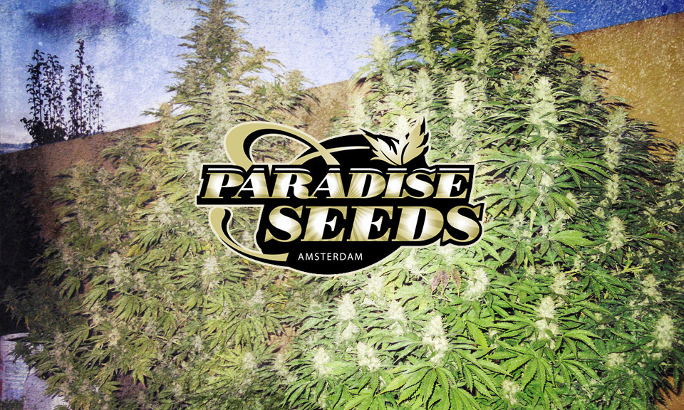 Paradise-seeds_2