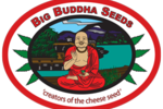 Big_buddha_seeds_amsterdam_seed_center_2