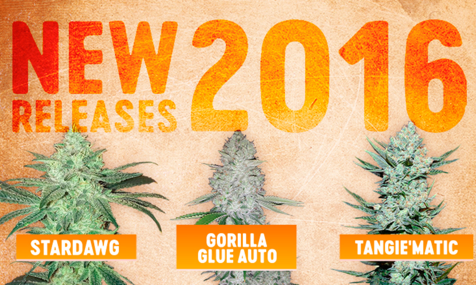 Fast Buds New Releases 2016!