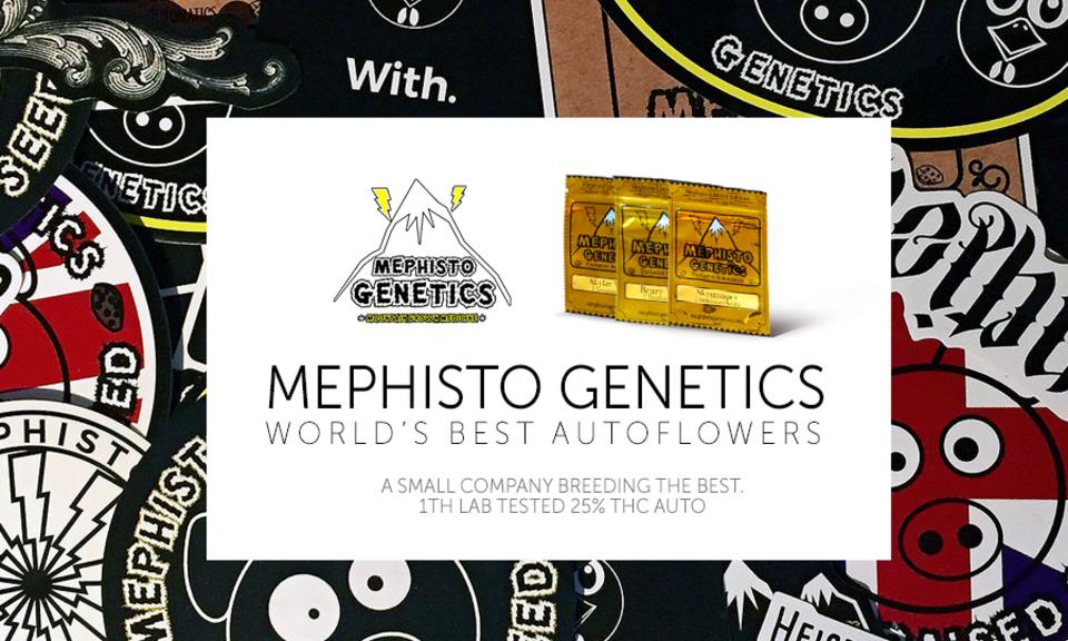 Mephisto Genetics in Green Parrot! | Blog | Green Parrot