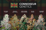 Connoiseur_genetics_news