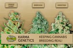 Karma_genetics_small