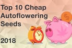 Top10cheap9