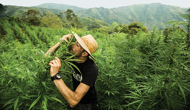 Foto de Green House Seeds