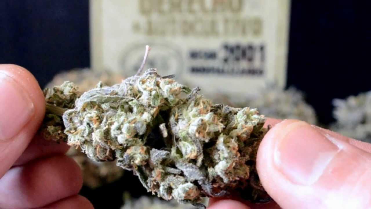Catas de la marihuana
