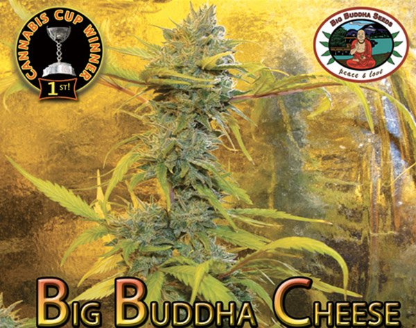 Big Biddha Cheese