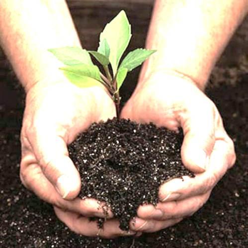 Abonos org nicos para la planta de marihuana - Abono organico para plantas ...