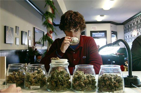 Cata Cannabis